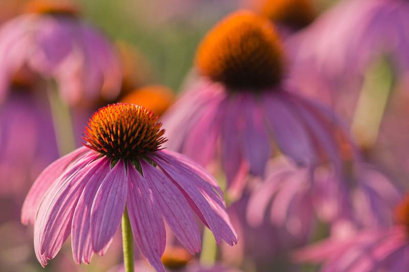 Botanicgarden11 308.jpg