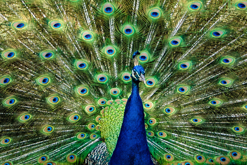 There is more than flowers in the garden as they have beautiful buildings, slave quarters, and a variety of animals including this peacock.