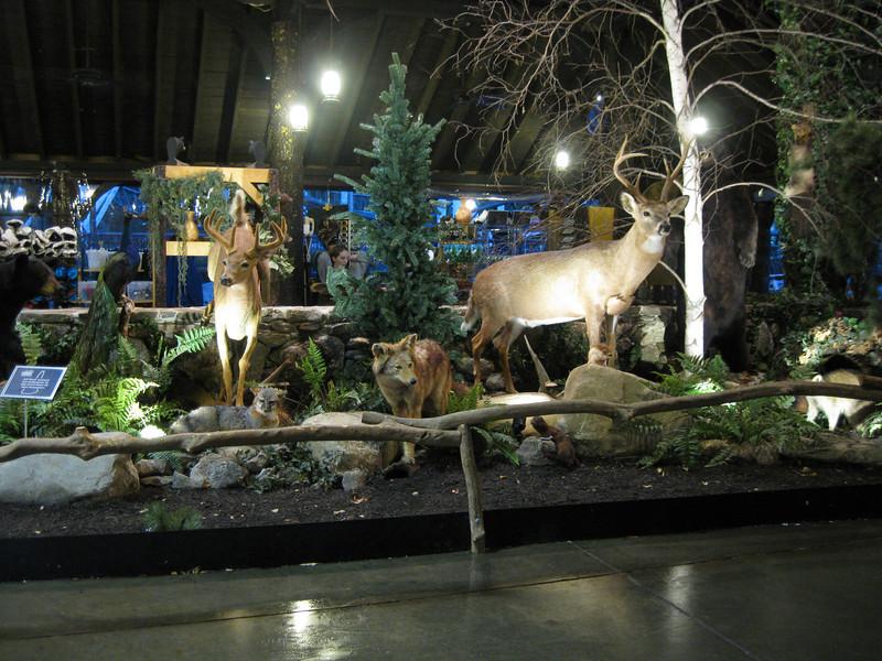 New Hampshire wildlife taxidermy display in Bear Lodge.