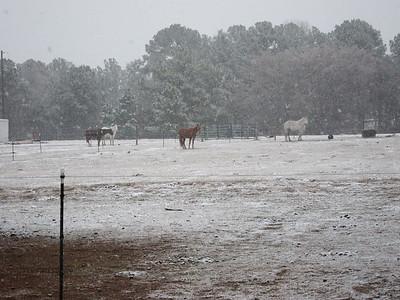 Horseback in the Snow 2/12/2010