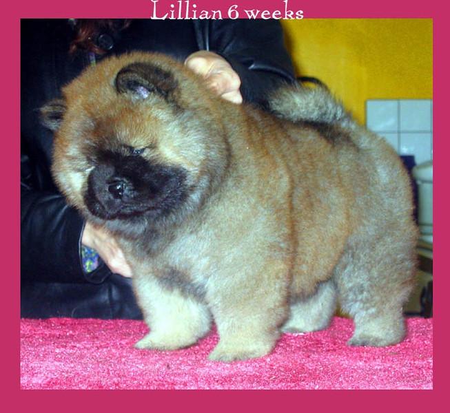 Lillian  Meg x Gator
