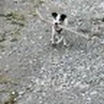 farley pups 034-2.jpg