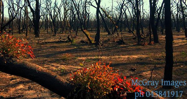 bushfire recovery Brisbane RangesVictoria