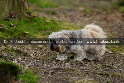 01.03.2014 Hundespaziergang IGT