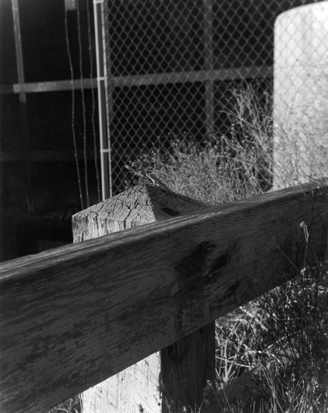 I saw this little guy sitting on a weathered post so I snapped a quick shot of him.  As usual the scan does not do the print justice.  The tonal scale is blown out and the sharpness of the original is lost.  For casual viewing the scan is ok - but it does little to show the actual qualities of the print.  Not that it was a great shot or anything in the first place!