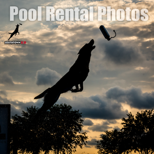 Pool Rentals at Southtown K9