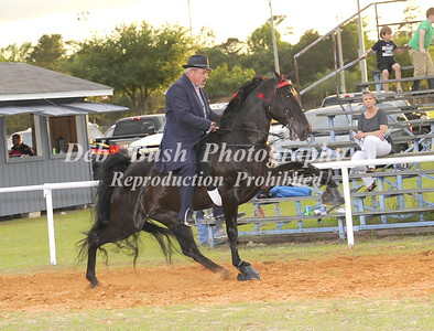CLASS 36   WALKING HORSE CHAMPIONSHIP