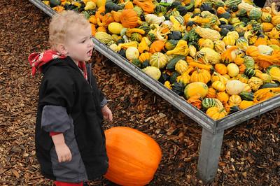 Pumpkin Farm 2012