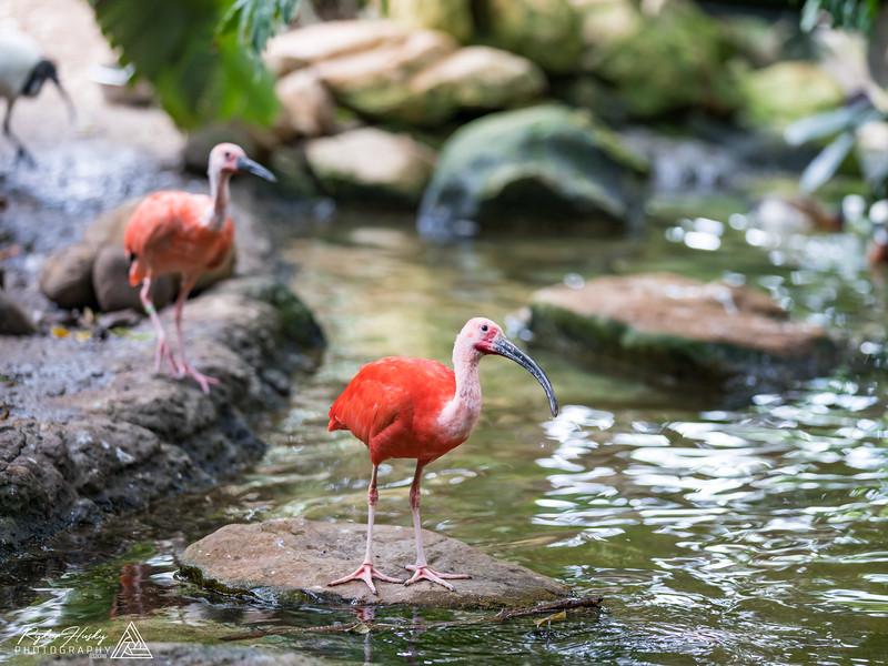 Santa Barbara Zoo 10-13-2018-045.jpg