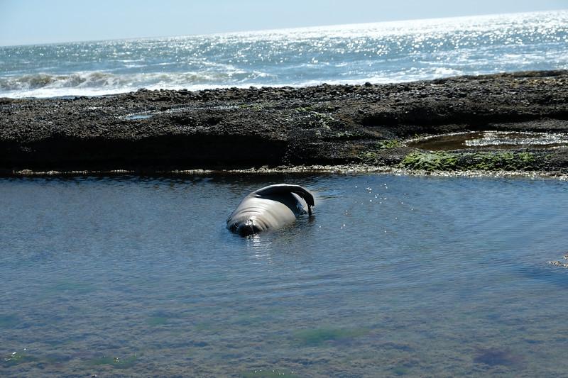 Leisurely Swim