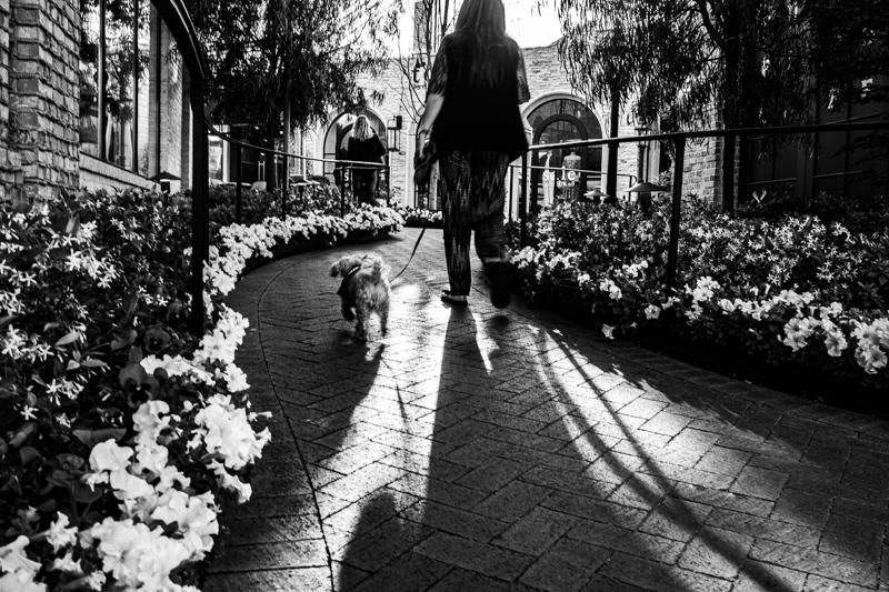 May 24 - Dog walking at the mall.jpg