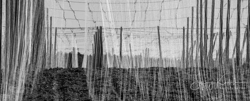 Field in the net