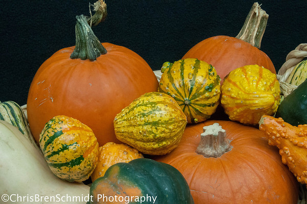 gourds-edited