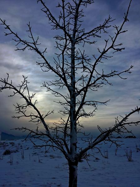 TreeWinterErieCO-001