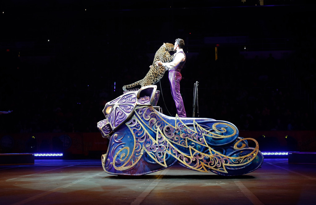 . Big-cat trainer Alexander Lacey performs with a leopard Sunday, May 1, 2016, in Providence, R.I., during the show where Asian elephants made their final performance in the Ringling Bros. and Barnum & Bailey Circus.  (AP Photo/Bill Sikes)