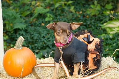 Fetch Halloween 2014
