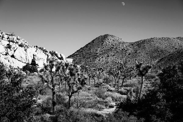 HIgh Desert Forest