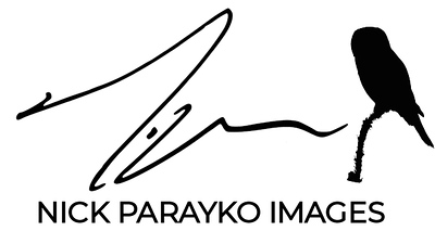 npi_signature_logo-black.jpg