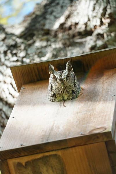 1_23_21 No vacancy at the Owl Box.jpg