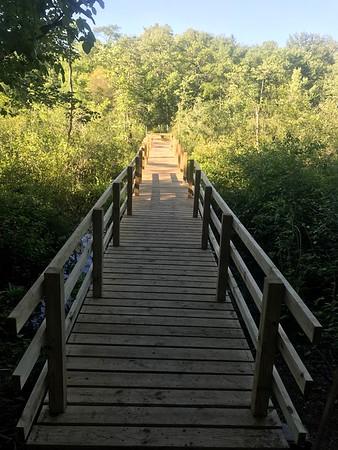 Walpole Town Forest-Jarvis Farm Boardwalk Link