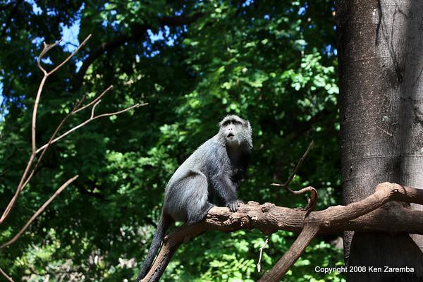 Tanzania- Lake Manyara National Park