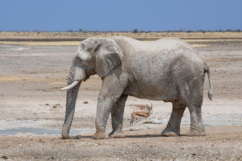 Namibia 69A8378.jpg