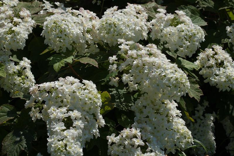 2009 06 30_NY Botanical Gardens_0676.jpg