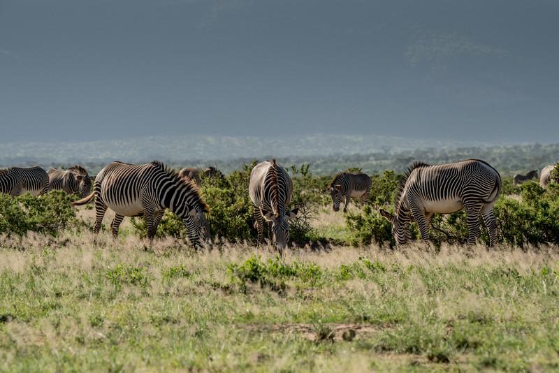 Samburu (3 of 70).jpg
