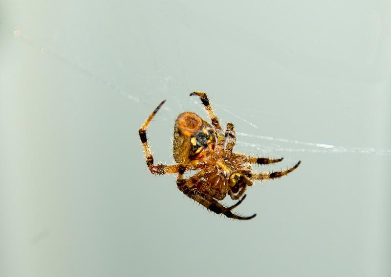 Spiders-1.jpg