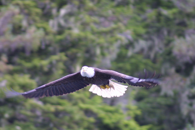 eagles from disc 018.jpg