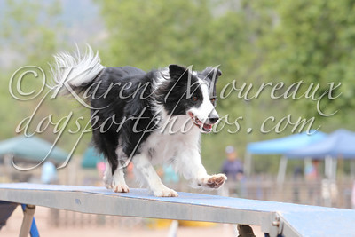 Contact Point AKC Agility June 17, 2011