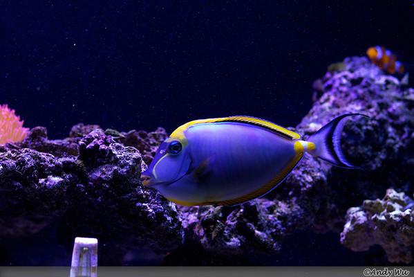 Tank and Fish