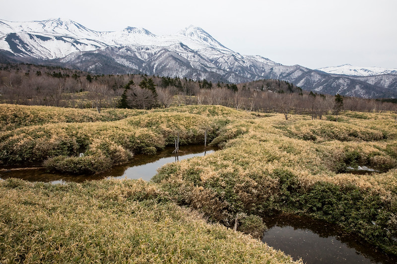 Habitat, Shiretoko National Park, Utoro, East Hokkaido, Japan 2018.04.25-3875.jpg