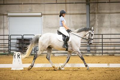 Horse 180
