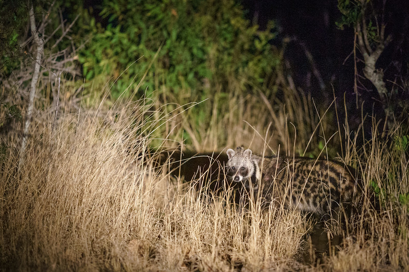 LeopardHills-20181001-4207.jpg
