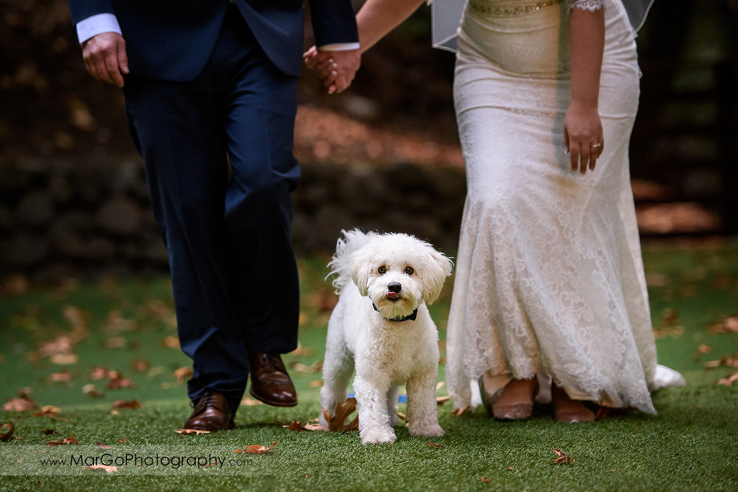 colse-up of white dog between bride and groom legs at Saratoga Springs Cathedral Grove