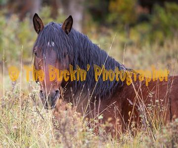 Alberta Wild Horses Fall 2019