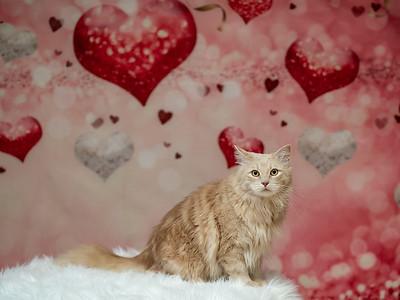 Mr. Fluffy Valentine 2020