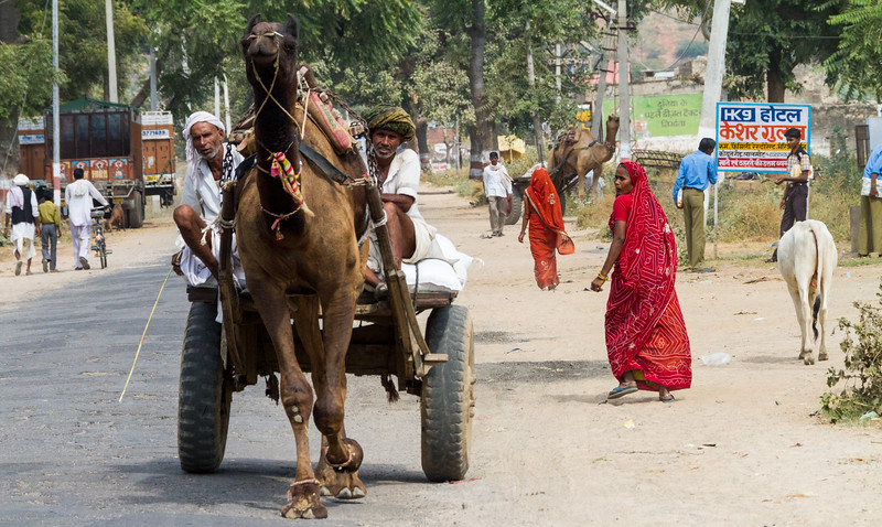 Camel cart on road - Asia - India