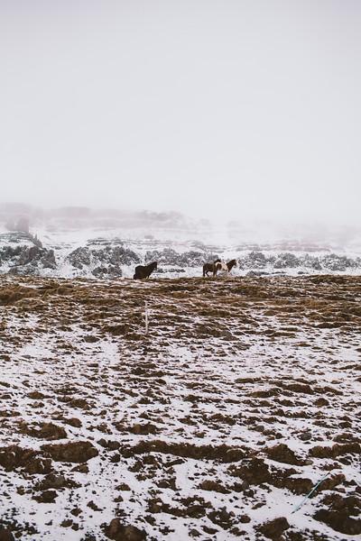 Iceland-80.jpg