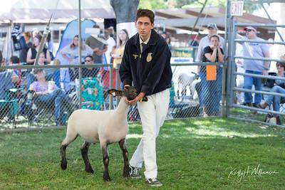 2019 Citrus Fair - SHEEP