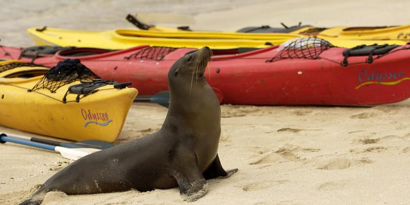 South America Adventure Galapagos Ecuador