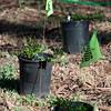 NOTRE DAME DE NAMUR STUDENT PLANT