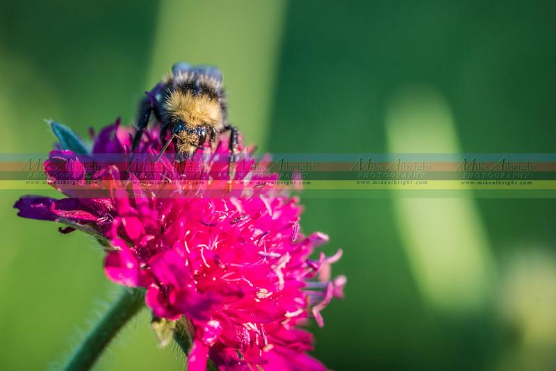 stock-bee1.jpg