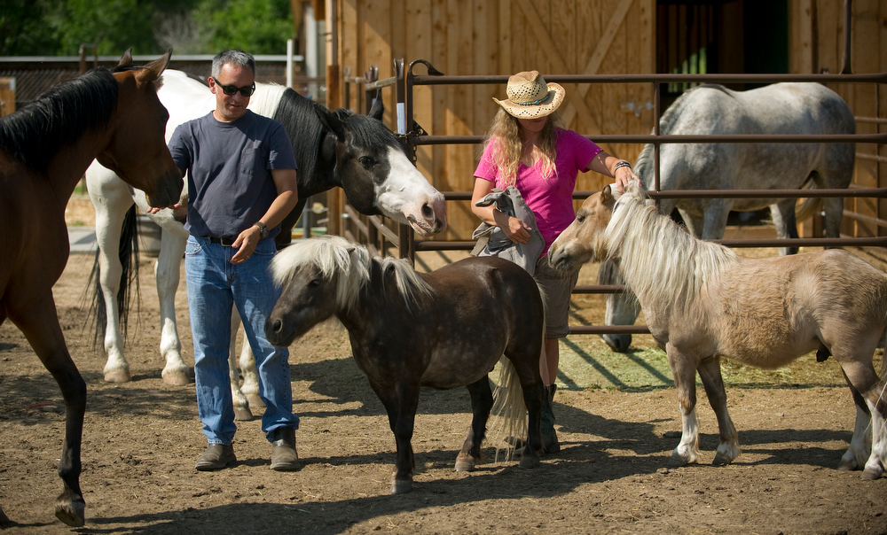 . Lenny and Sara Martinelli  and their horses at at their Three Leaf Concepts Farm in Lafayette on Wednesday, July 3, 2013.  They also have, chickens, goats and are raising vegetables for their restaurants. The couple have three children. (Photo By Cyrus McCrimmon/The Denver Post)