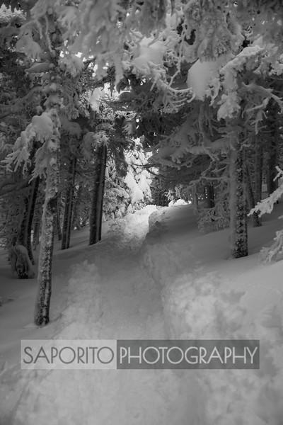 Crawford Path, New Hampshire. January 2019.