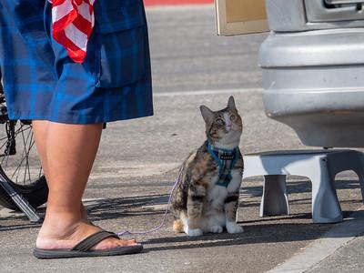 Beach Cat August 2018