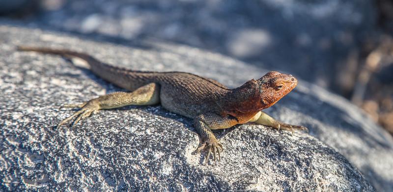 Galapagos_MG_4517.jpg