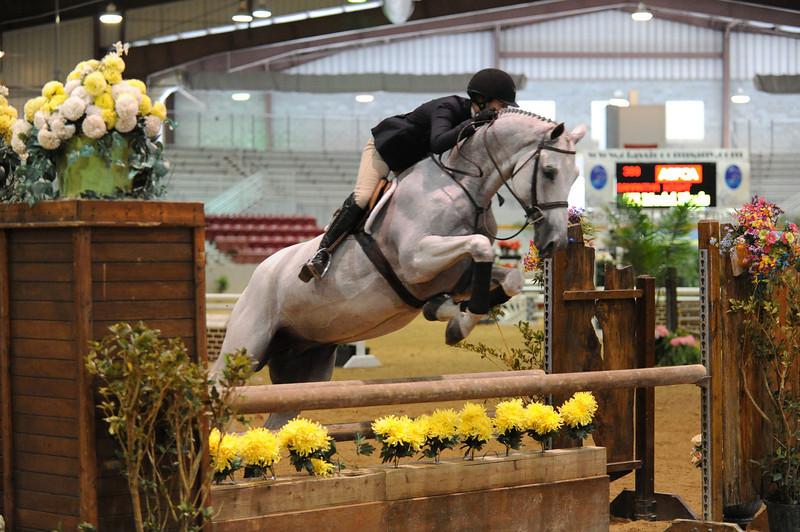 Horse show (3).jpg