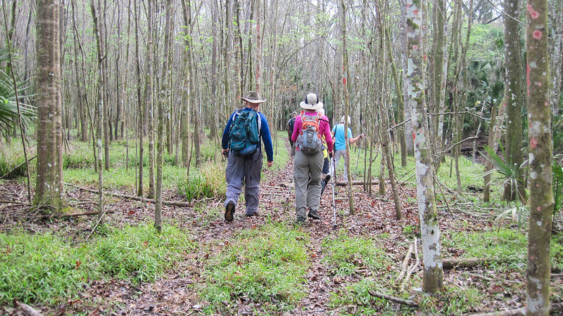 Hikers in a young forest
